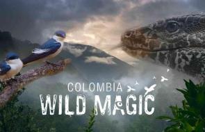 Birds, snake, Colombia landscape