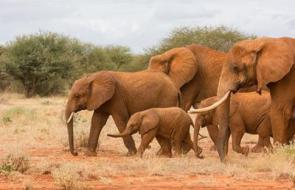 Elephants by Peter Steward.jpg