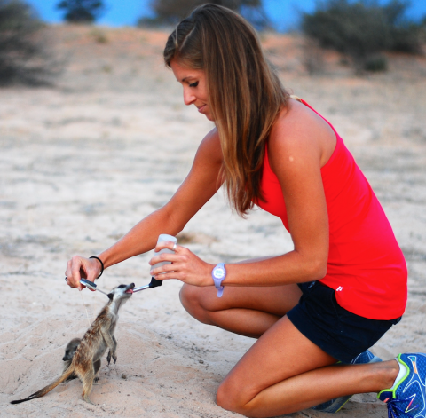 In South Africa's Kalahari Desert, Kendra Smyth habituates a meerkat for an experiment in which she'll be measuring ear thickness.